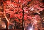 上ノ山公園紅葉ライトアップ.jpg