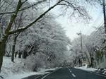 今朝の雪.jpg