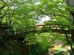 新緑の河鹿橋.jpg